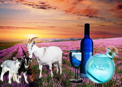 OCEAN VODKA DISTILLERY, SURFING GOAT DAIRY & LAVENDER FARM GOURMET LUNCH TOUR
